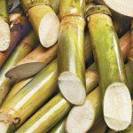 Dr Ramsammy: Sugar production at 165,000 tonnes