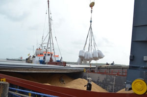 Rice being loaded for export to Venezuela