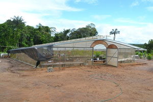 Malaysian Technology: One of the modern and well equipped greenhouses at the test farm