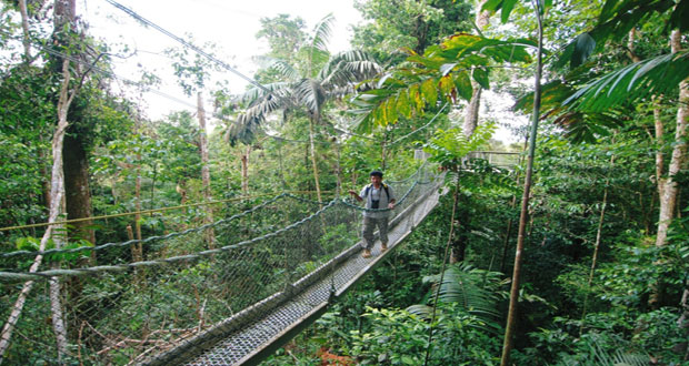The Iwokrama Canopy Walkway ... & Guyana will forge ahead with noble intention of Iwokrama - President ...