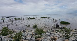 Persons planting mangrove seedlings at Better Hope, ECD