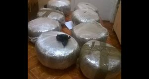 The confiscated compressed cannabis that was seized