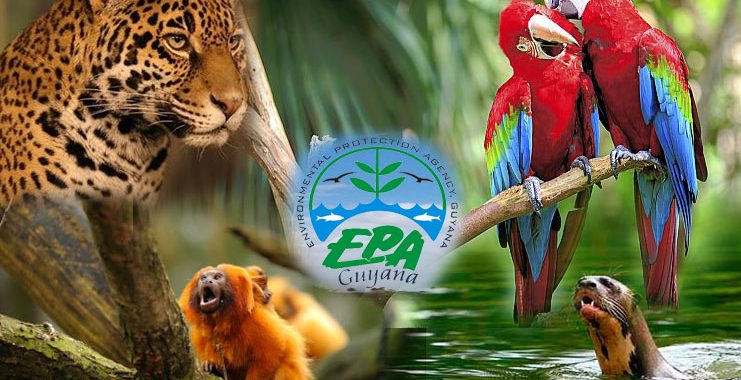 Know More about the EPA