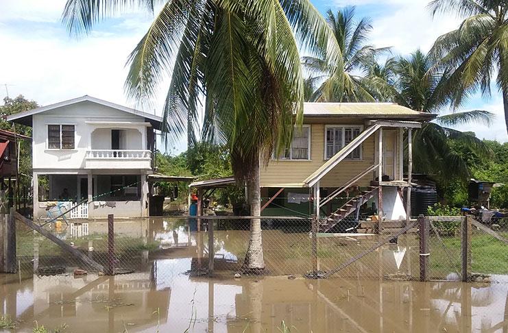 Canje Floods Destroy Poultry Cash Crops Guyana Chronicle