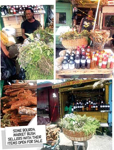 Bush tea and bush medicine - Guyana Chronicle