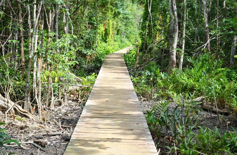 The walkway which links the town of Mabaruma with the nearby community of Silver Hill