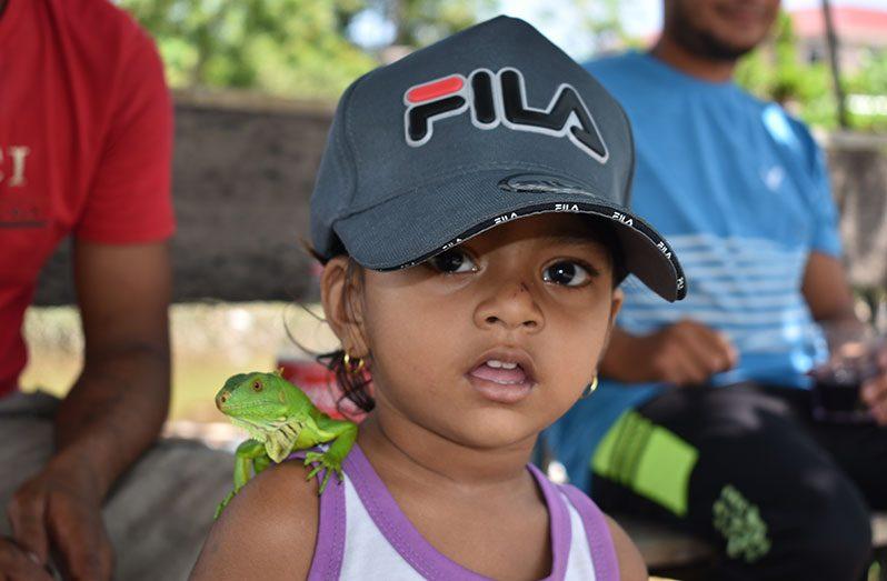 Malinda Narine with her pet iguana (Carl Croker photos)