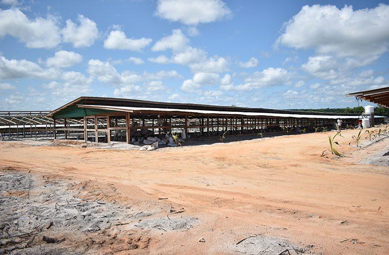 The poultry farm at Loo Creek (Carl Croker photos)