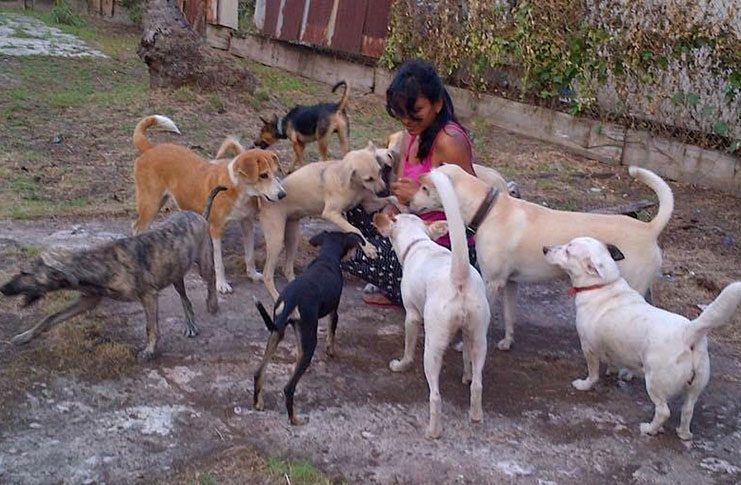 "Genevieve Beepat called ""Judy"" with some of her 14 dogs."