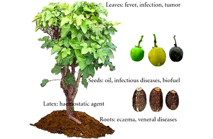 The plants and it uses