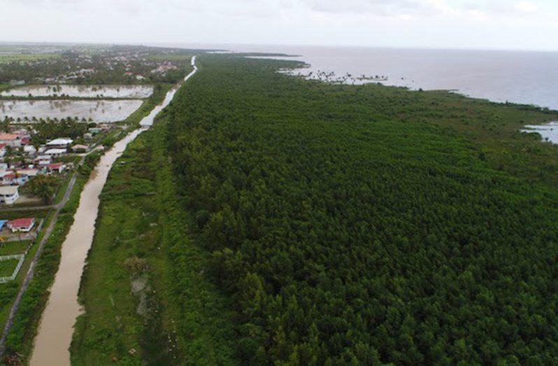 Restored mangroves ecosystem along Essequibo Coast, Region Two (Pomeroon – Supernaam)