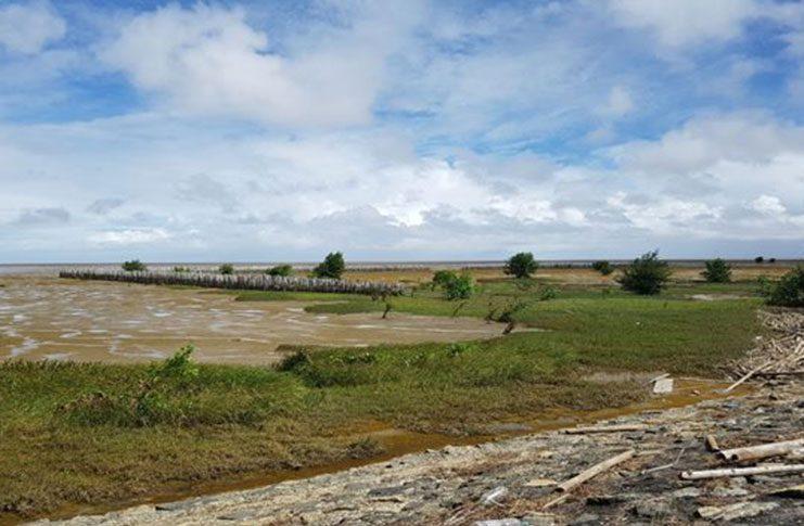The Bamboo Brushwood Dam at Walton Hall (Photo courtesy NAREI)