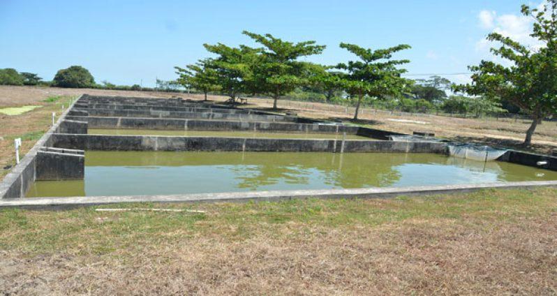 Aquaculture ponds at the Satayadeo Sawh Aquaculture Station at Mon Repos, East Coast Demerara